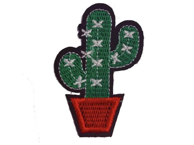 Cactus 1365 1024